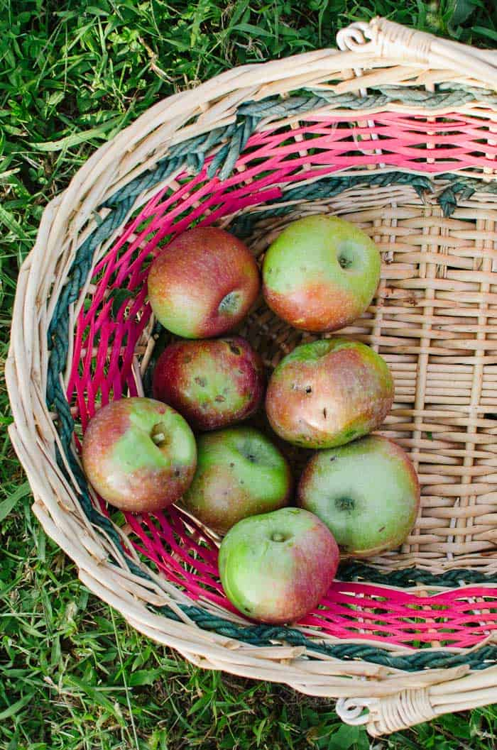 Organic and imperfect apples | Very EATalian